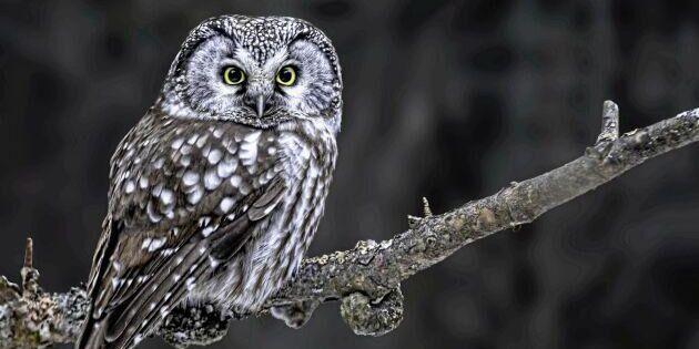 Lär dig mer om vilda djur och svensk natur