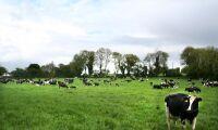 Irländskt kooperativ höjer mjölkpriset