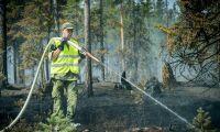 Skogsstyrelsen inrättar direkttelefon för skogsägare