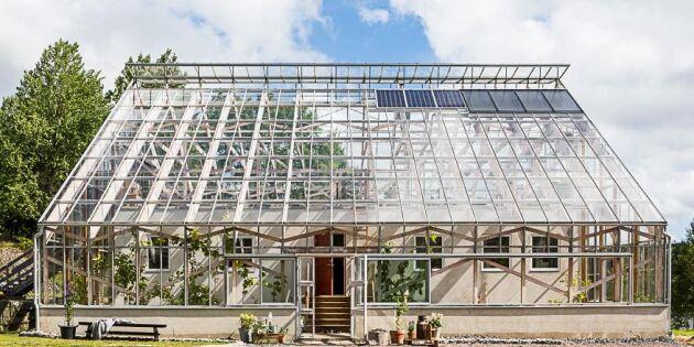 Ge efter för din odlingshobby – flytta ihop med dina växter!