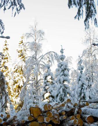 Många självverksamma skogsägare passar på att arbeta i skogen på vintern.