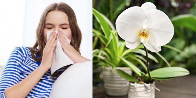 Växter och blommor inomhus: 10 tips för allergiker!