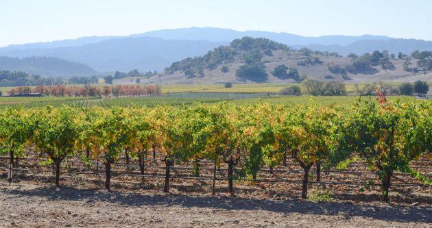 Tusentals druvodlare och hundratals vintillverkare har drabbats av bränderna i norra Kalifornien, vars produktionsvärde beräknas till 10 miljarder dollar om året. Napa Valley är ett av de vindistrikt som drabbats.