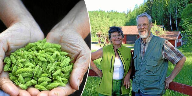 Lena och Ola gör succé med unika produkter från sin skog