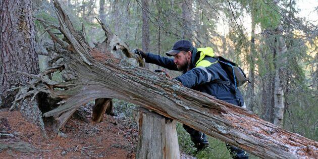 Skogsstyrelsen kräver svar om arbetet med nyckelbiotoper