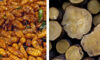 Sveaskog vill fodra insekter med skog