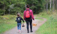 Ny studie visar skogens sociala värden