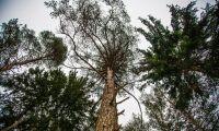 Skogsbolag förlorar 543 miljoner