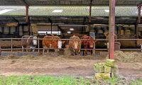 Nu frigörs 15 000 ton grovfoder