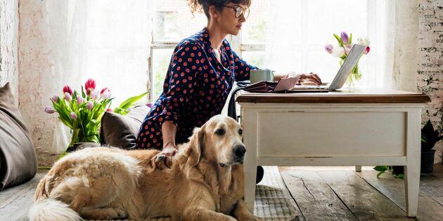 Undersökning visar: Det tycker svenskar om att ha hunden på jobbet