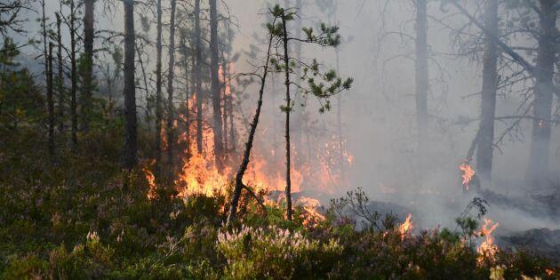 Stor risk för skogsbränder under helgen