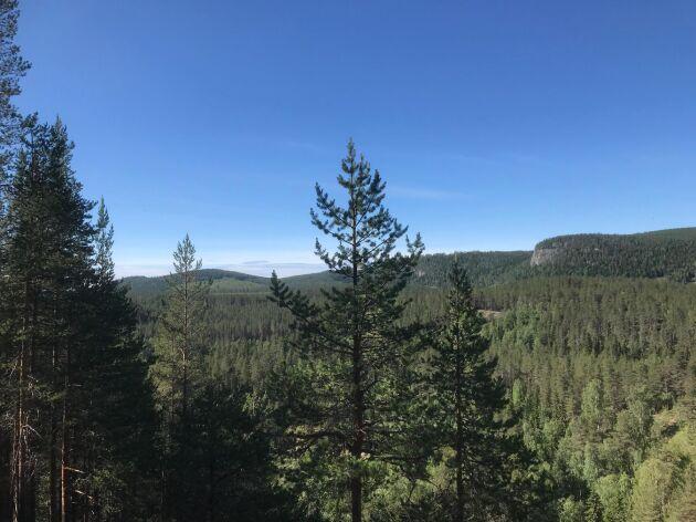 """""""Utredningsuppdraget innehåller delar till en strategi för samverkan mellan staten och skogsindustrin för att förmå de små skogsägarna att genom skogscertifiering ge bort sin mark och sina rättigheter eller tvinga dem att finansiera sin egen socialisering"""", skriver Sverker Liden."""