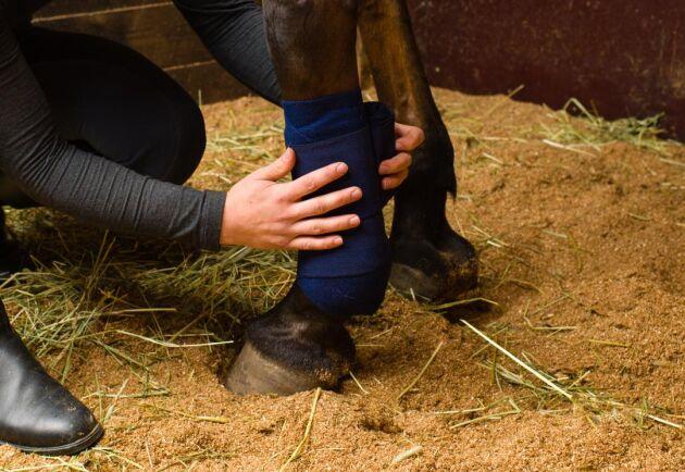 Omstridda Djurambulansen i Skåne har på kort tid fått nya kontrakt för att hämta och stalla upp omhändertagna djur.