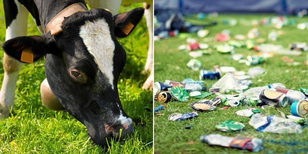Håkan förlorade 10 kossor på grund av nedskräpning – nu agerar byborna