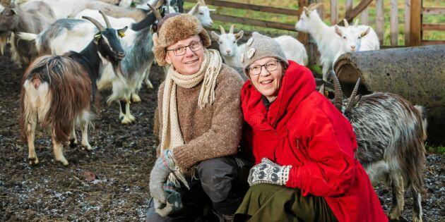 Knut och Jaana gör succé med getter och ost i Kalix