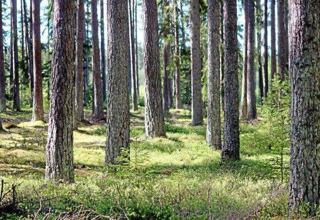 Välskött skog lockar köpare.