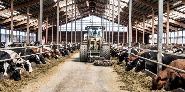 Trenden: Mjölkbönder satsar och skalar upp