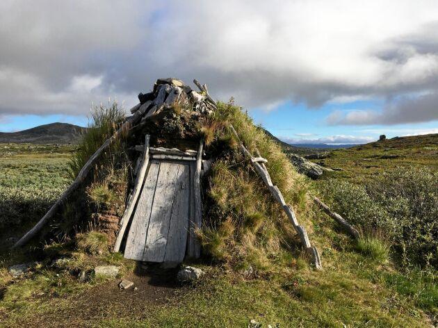 Den gamla Tjäurakåtan, några kilometer söder om Piteälven övre lopp, går att ta skydd i om man behöver. Men den har sett bättre dagar.