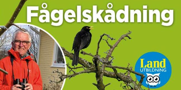 Nyhet! Gå Lands onlinekurs i fågelskådning