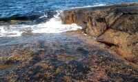 Algodling kan bli möjlig i kalla vatten