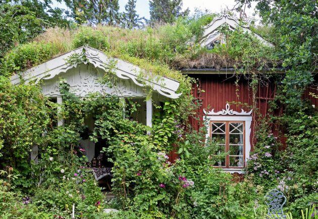 Torpet i Källäng omringas av klätterväxter och handgrävda näckrosdammar.