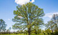 Danska forskare söker klimatanpassade träd i Iran
