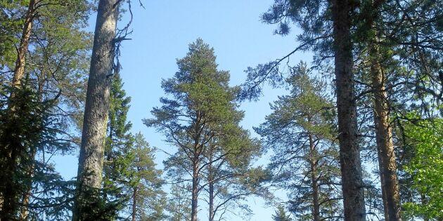 Ytterligare satsningar på skydd av värdefull skog