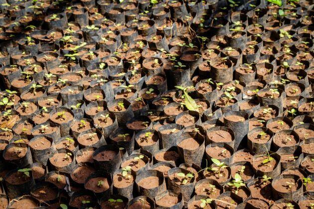 Enligt kritikerna är det är inte så enkelt att klimatkompensera bara genom att plantera träd som ska binda koldioxid.