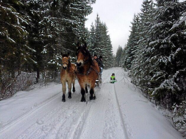 På vintern brukar flera generationer från Misterhults gård göra utflykter i skogen.