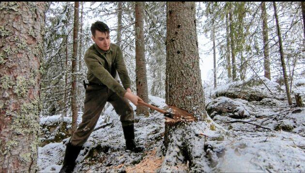 Riktskäret görs med yxa. Fällskäret görs med en lång timmersvans Erik hittat på loppis.