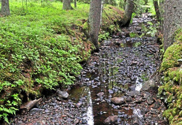 Konsekvenserna av uttorkningen av Bredsjöbäcken sommaren 2018 blev bland annat döda flodpärlmusslor.