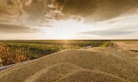 Sojapriset stiger efter USA-rapport