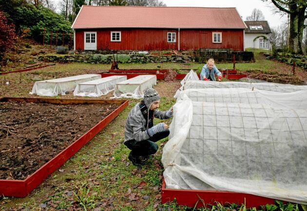 Gården är på 0,4 hektar. Lisa och Henrik odlar så mycket de får plats med, men skulle gärna vilja utöka. Grönsakerna som inte går åt i hushållet och restaurangverksamheten säljs via en Reko-ring i Falkenberg eller försäljningsdagar på gården. I ladans ena ände bor tuppen och hönorna, logen används som festlokal under sommarhalvåret.