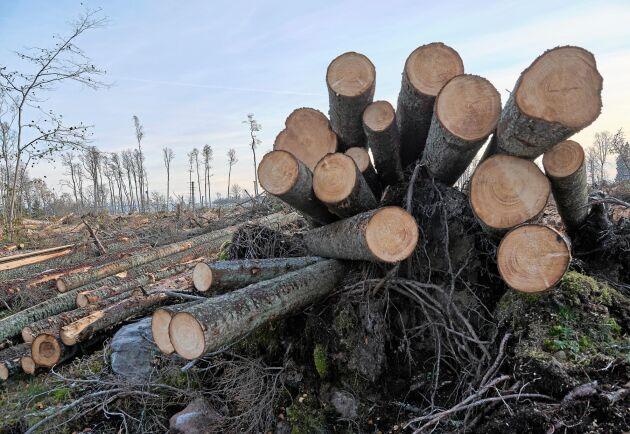Skogsavverkning i Stockholms skärgård i november 2019. Arkivbild.