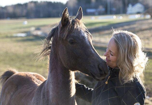 Phi Zefyr fick titeln Bästa hingstföl på Svenska Arabhästföreningens summer onlineshow 2020.