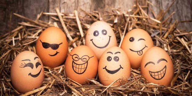10 spännande fakta om ägg – den fantastiska råvaran