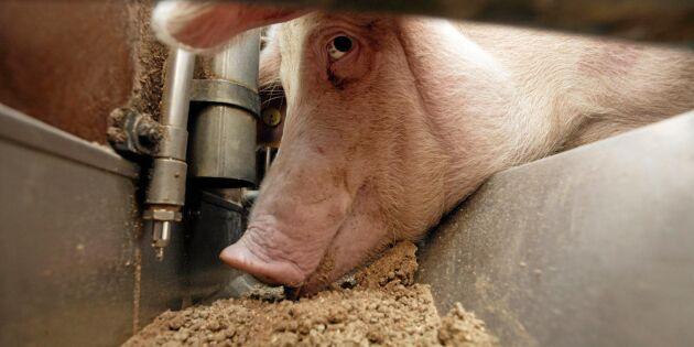 SLU håller webbkurs för minskad antibiotikaanvändning