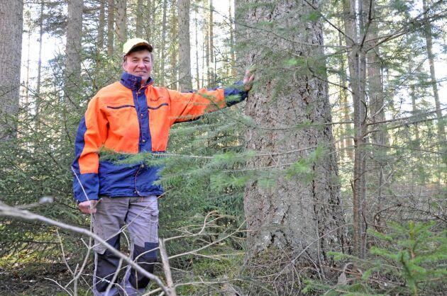 Lars Bertilsson får vänta ett bra tag till på att hans egna träd når nordamerikanska dimensioner.