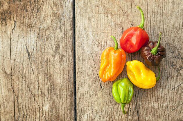 Chili 'Color Mix' är en blandning av olika habanerosorter med en scovillegrad på omkring 300 000 på den 600 000 gradiga skala som mäter chilifrukters hetta. Redan vid 5 000 grader ska frukterna hanteras försiktigt. Så inomhus i februari-april. Weibulls.