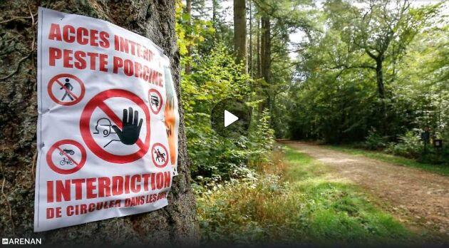 Frivillga, jägare och svinuppfödare stängslade vid gränsen mot Belgien.
