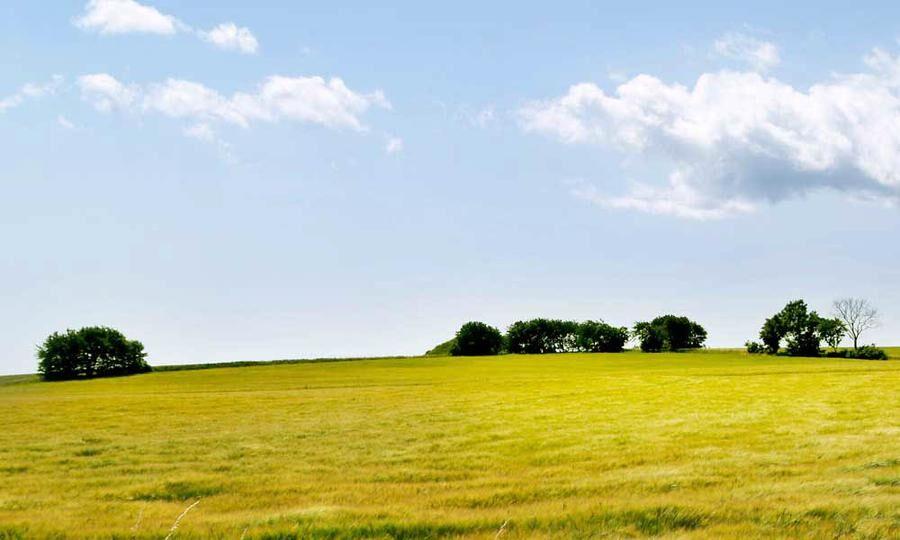 Öppna landskap med gula rapsfält.