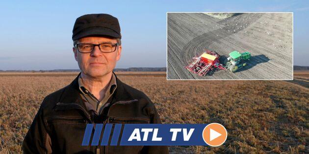 ATL TV: De ska så 400 hektar betor