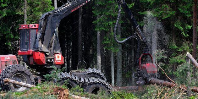 """Allt fler väljer bort skogen: """"Tjänar bättre nu"""""""