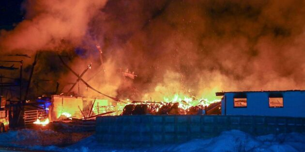 80-tal kor döda i ladugårdsbrand