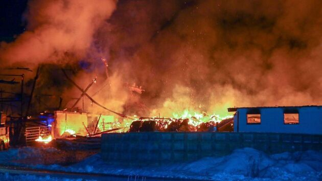 Många kor dog när en stor ladugård med omkring 100 kor började brinna i Säffle kommun.