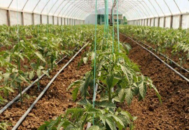FNAB har krävt att uppvärmningen helt förbjuds för ekologiska grönsaker och frukter, för att koldioxidutsläppen bidrar till växthuseffekten. Arkivbild.