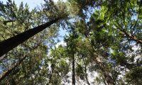 Mer pengar till regionala skogsstrategier