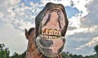 Hästtandläkare varnas - orsakade stort lidande