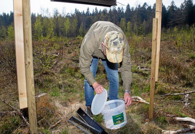 Jakob Olsson samlar upp barkborrarna i hinkar.