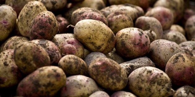 """Potatisen gynnas av ökat sug efter """"trygg"""" mat"""